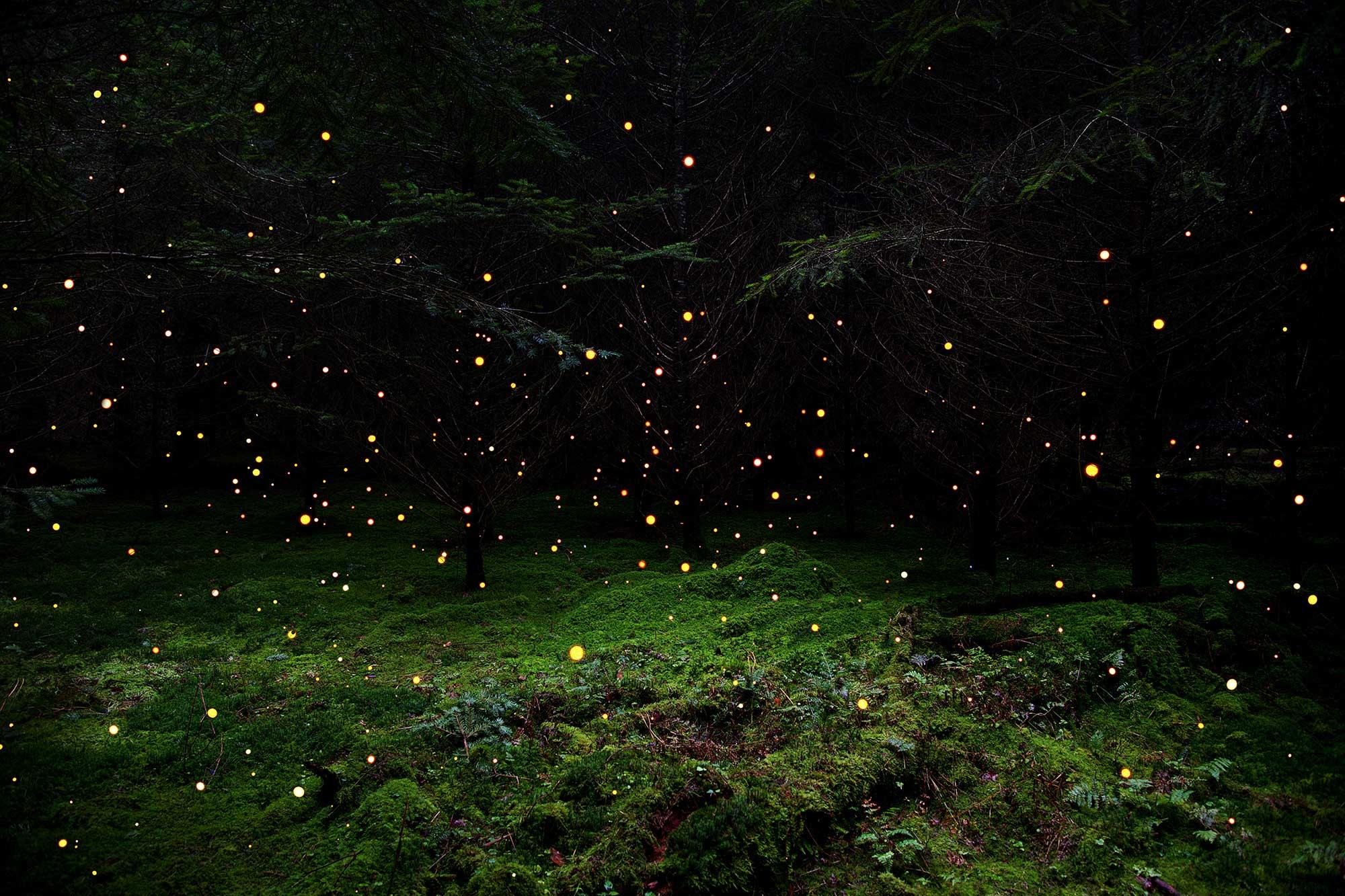 Stars-5-2014.jpg