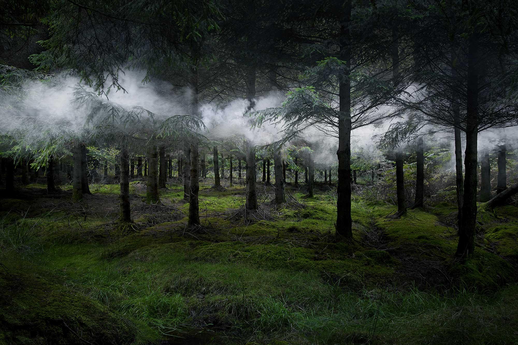 Between-the-Trees-3-2014.jpg