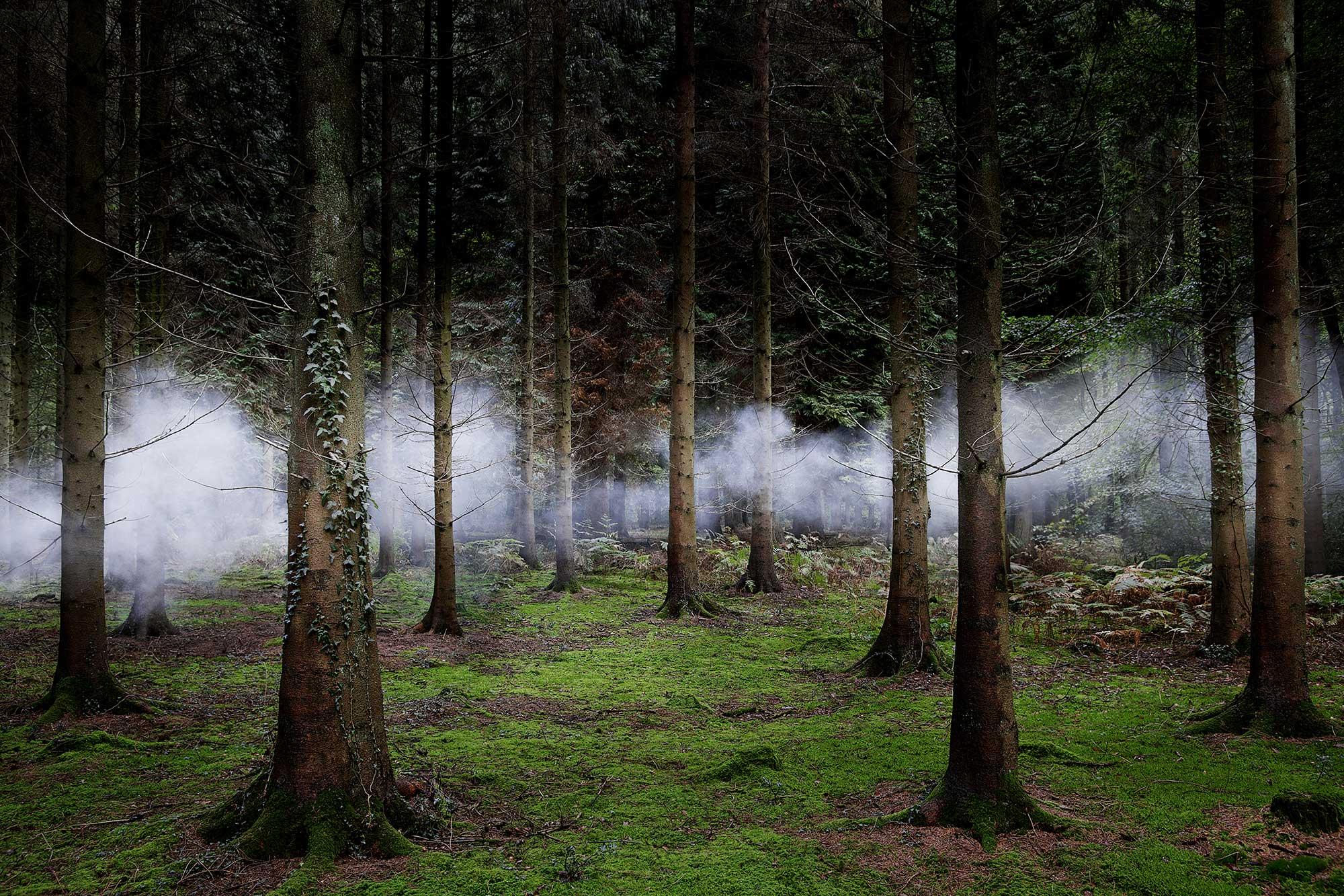 Between-the-Trees-1.jpg