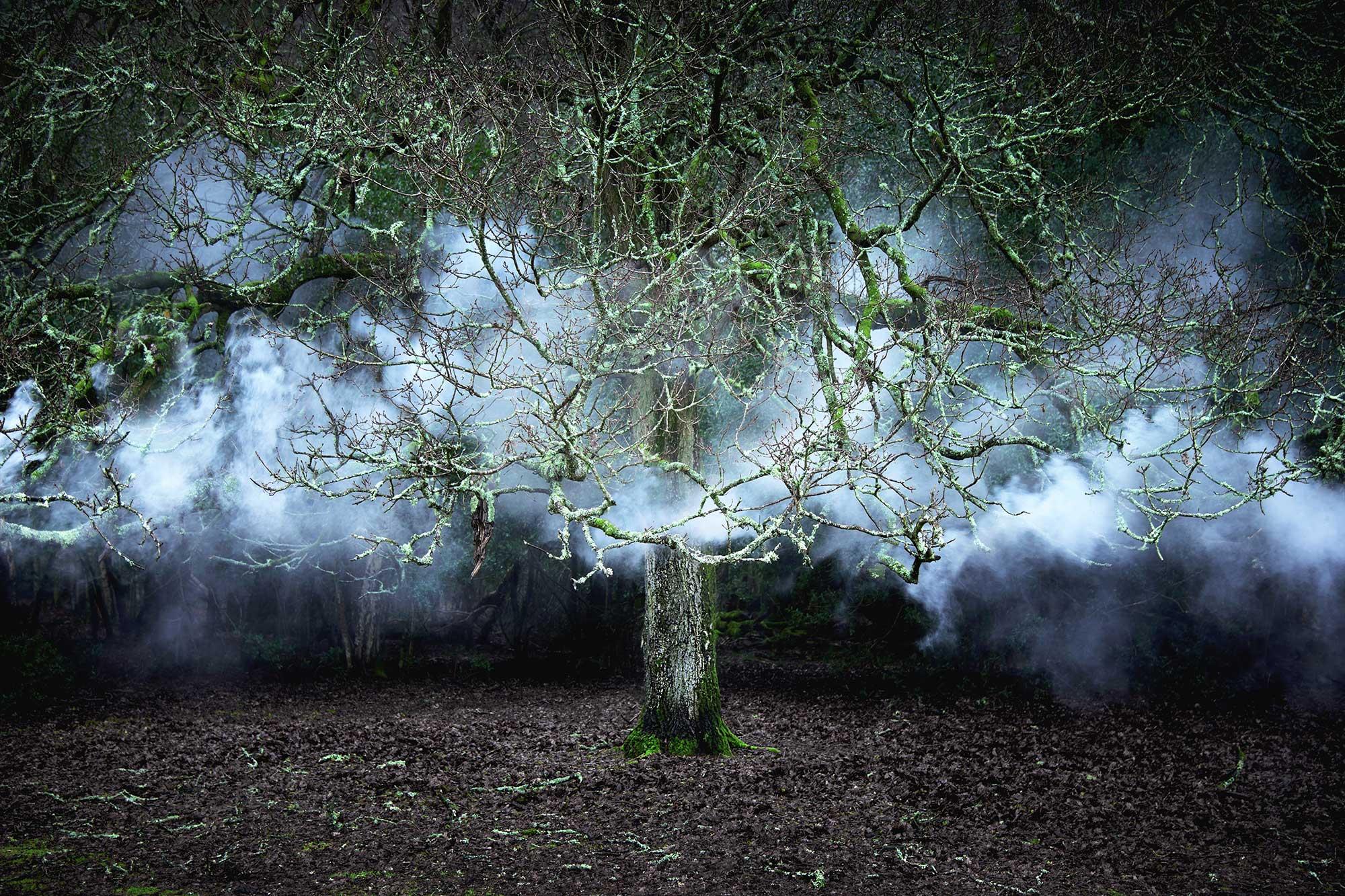 Between-the-Trees-11-2014.jpg