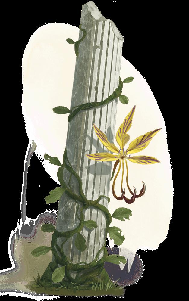 Yellow Musk Creeper - Art source here