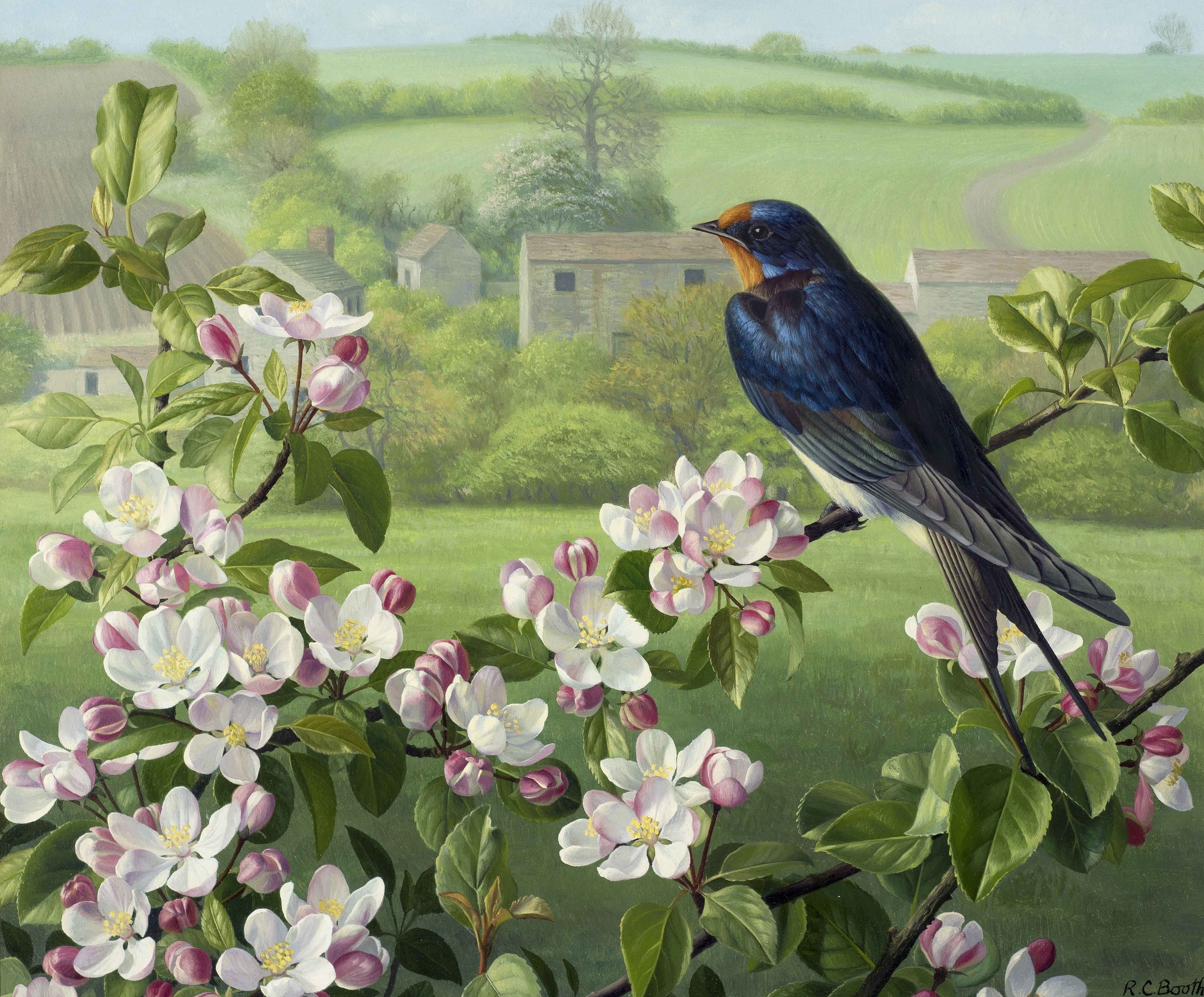 Swallow and Crab Apple Blossom | Raymond Booth