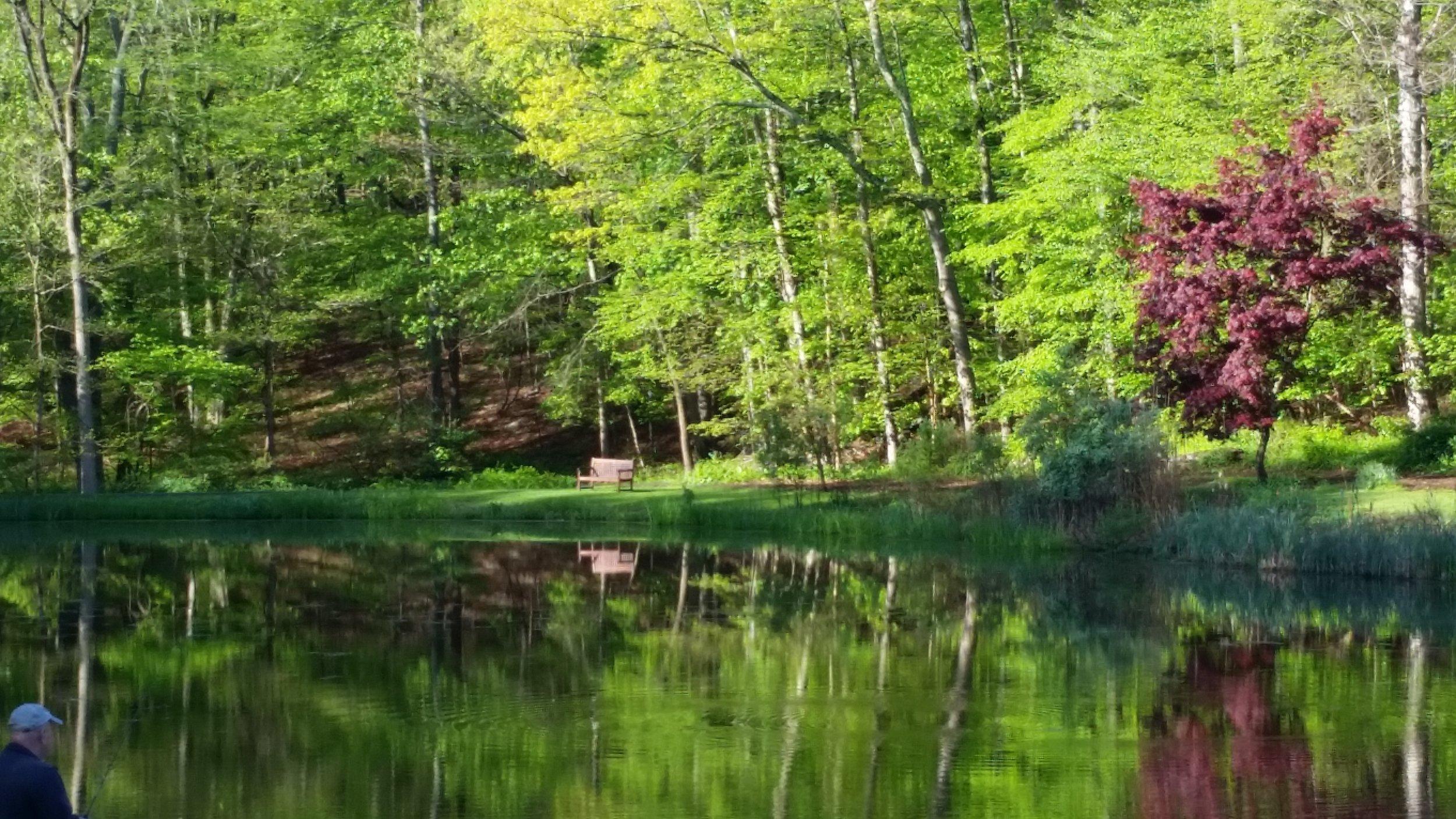 Pound Ridge Park pond