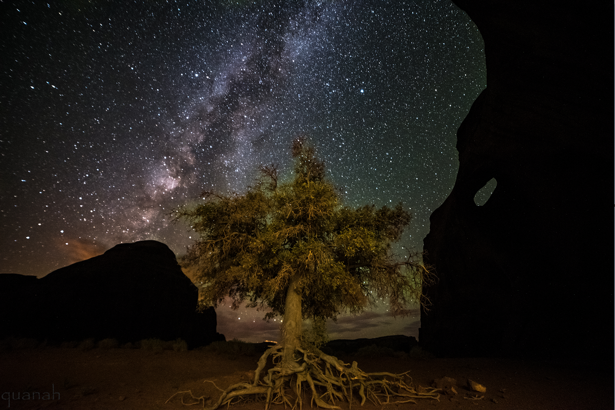 tree roots & cosmos