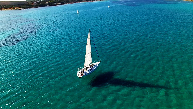 asinara walking and sailing excursion
