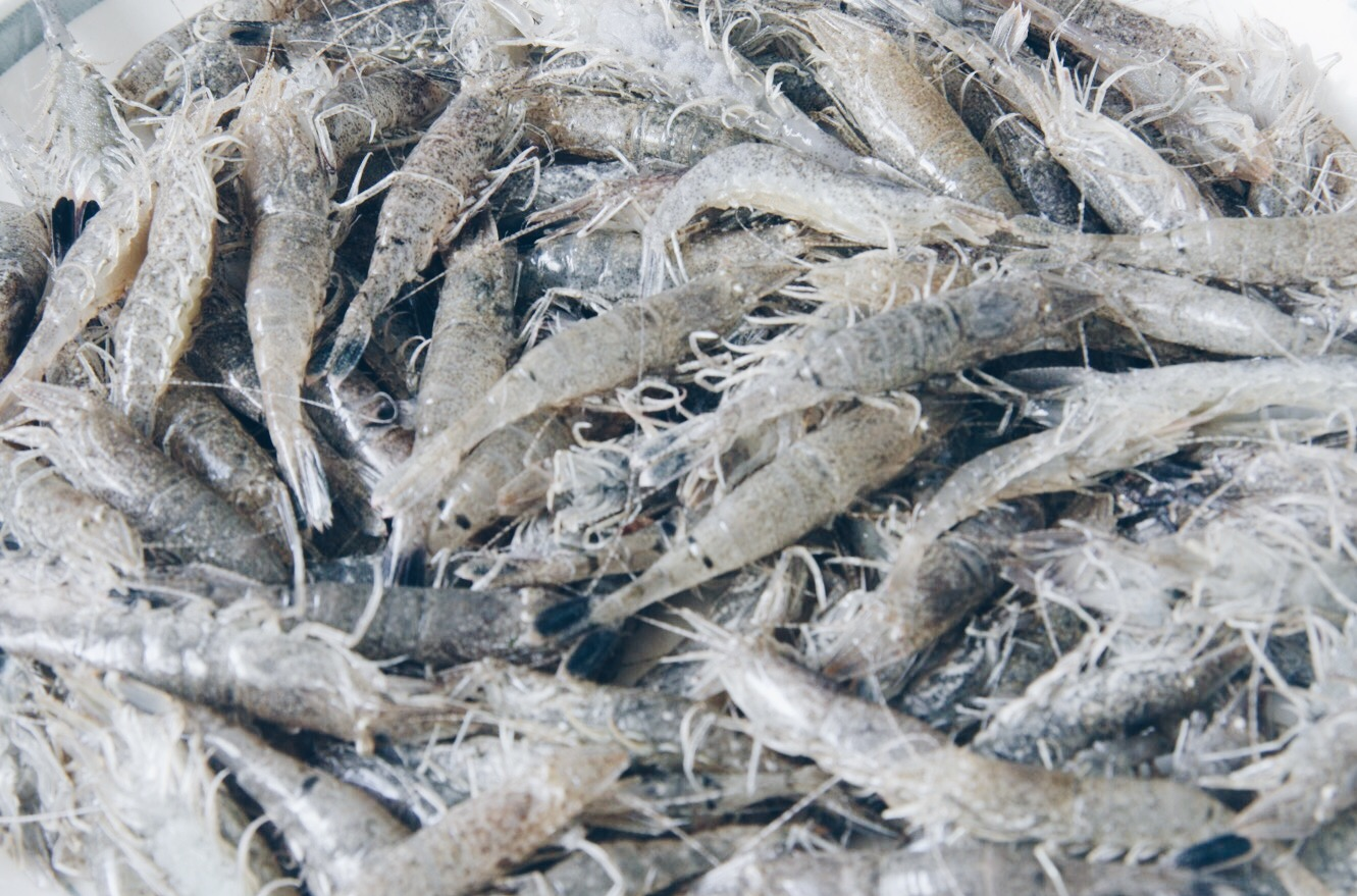 coastal forage shrimps.JPG