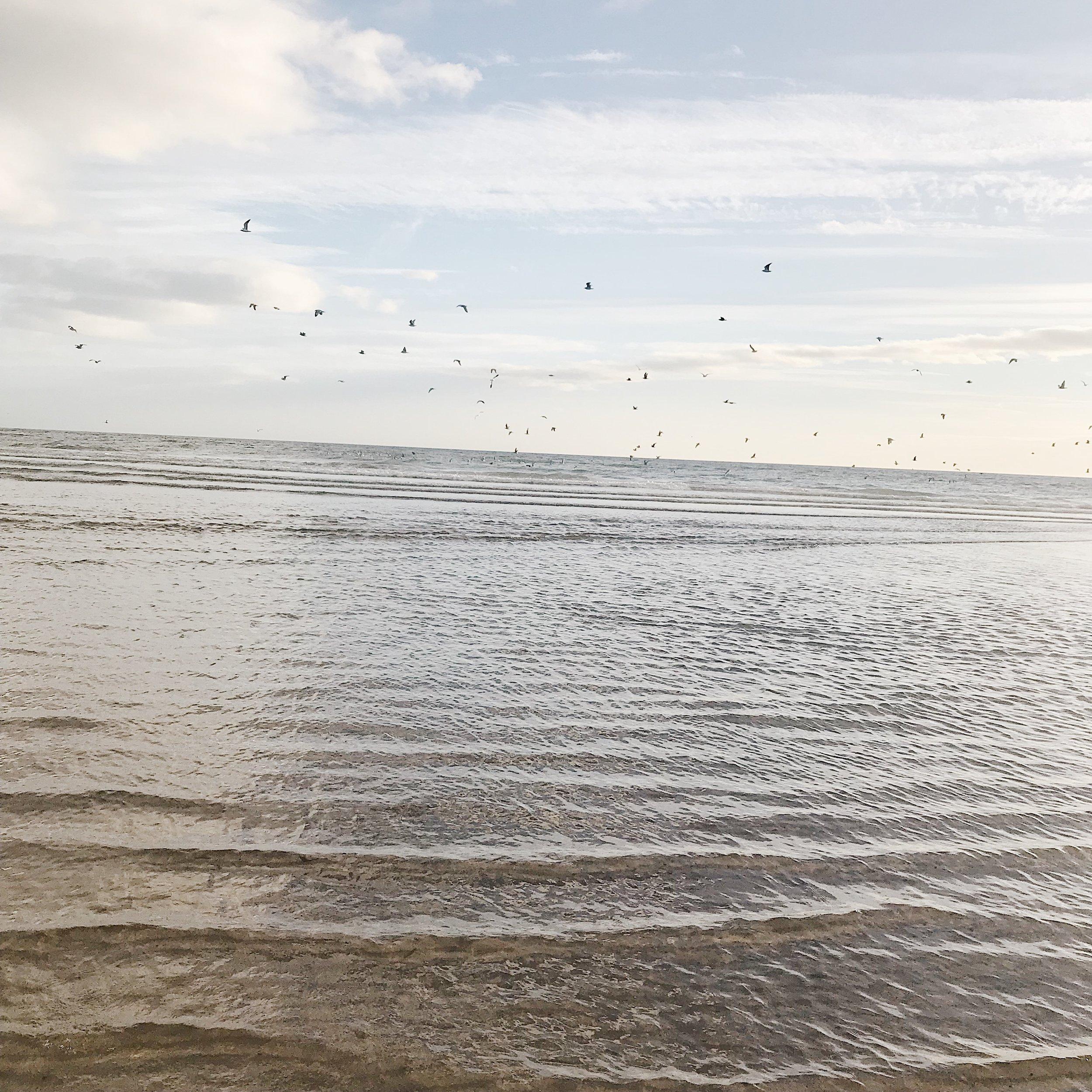 Cruden-Bay-birds2.JPG