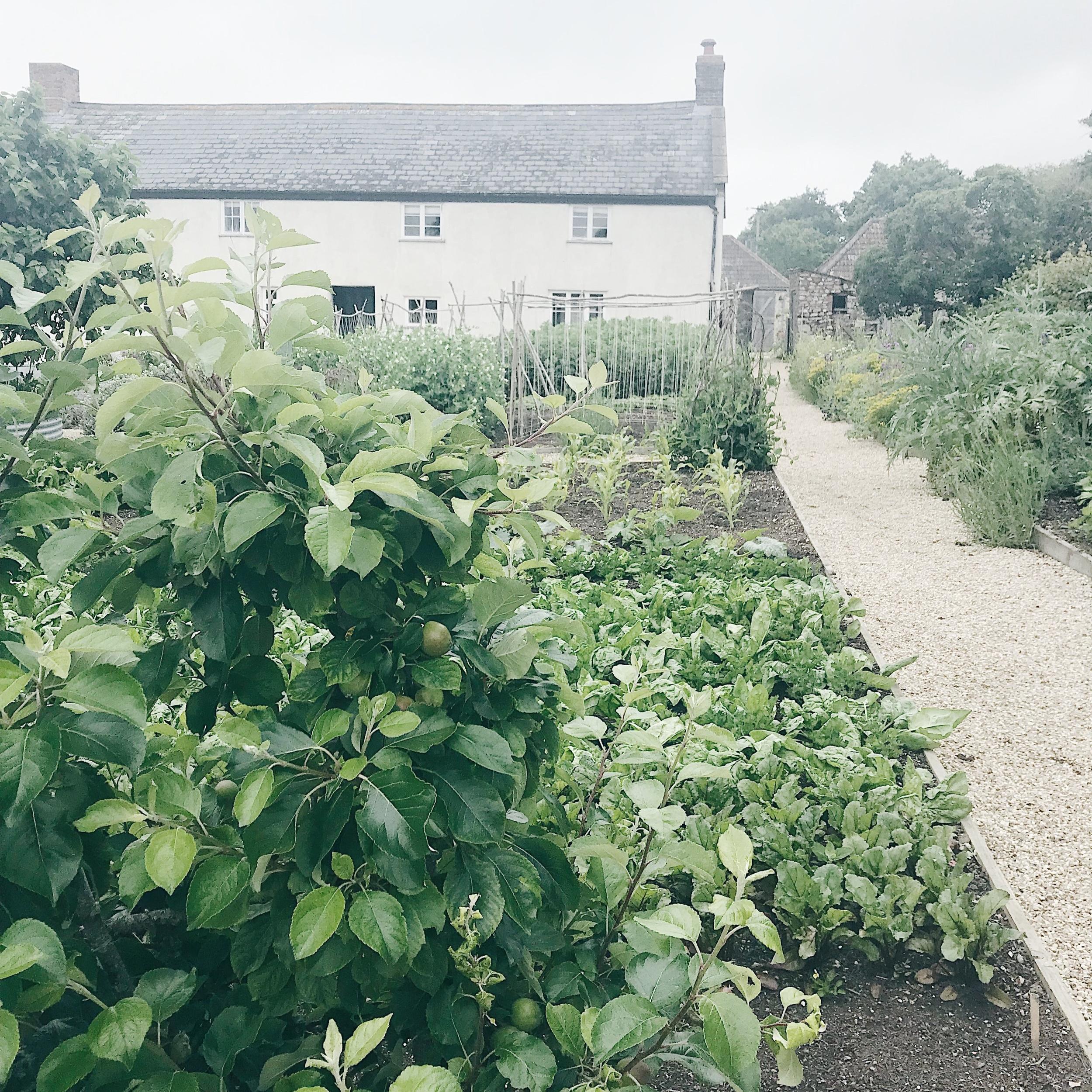 River Cottage Vegetable Garden