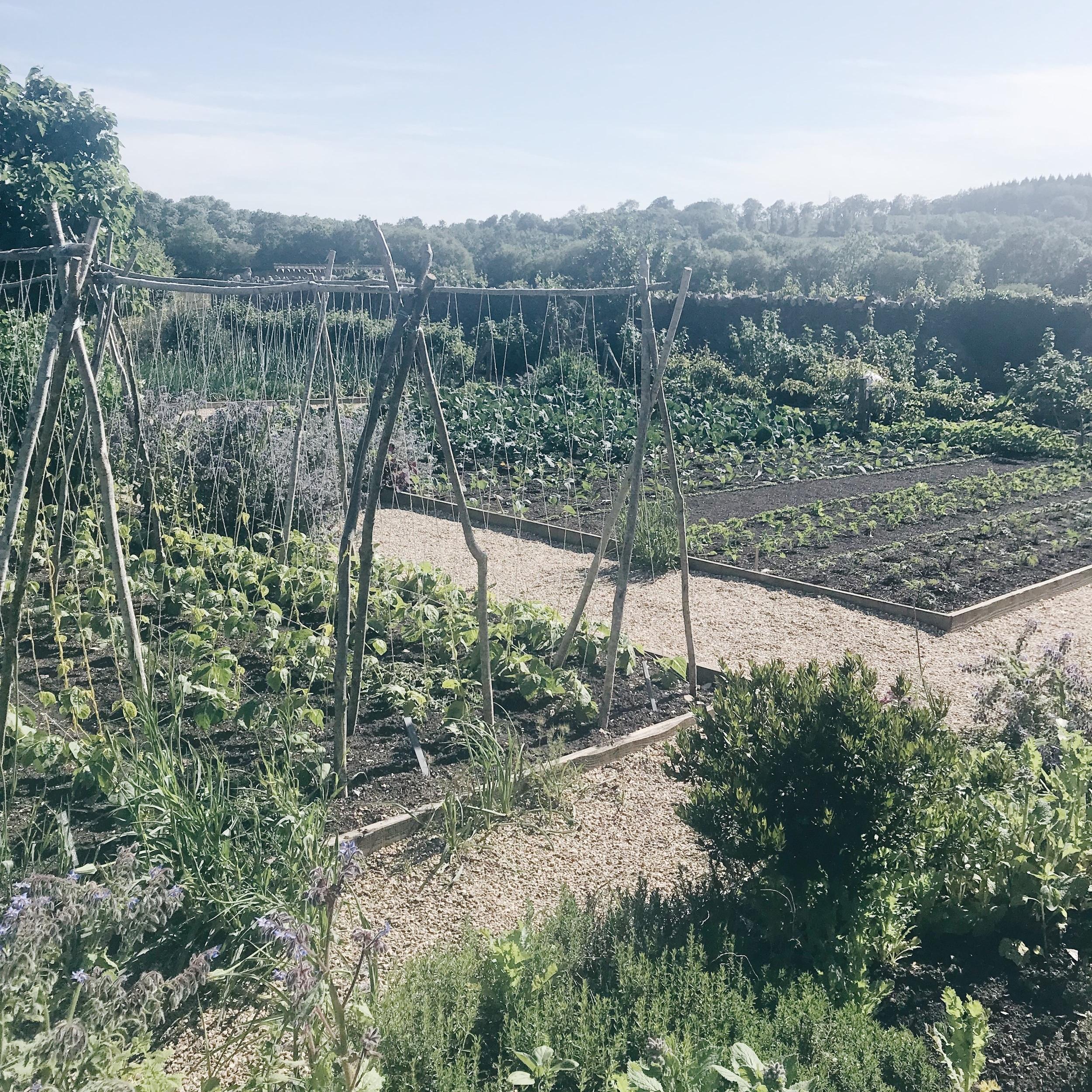 Walled-garden3.jpg
