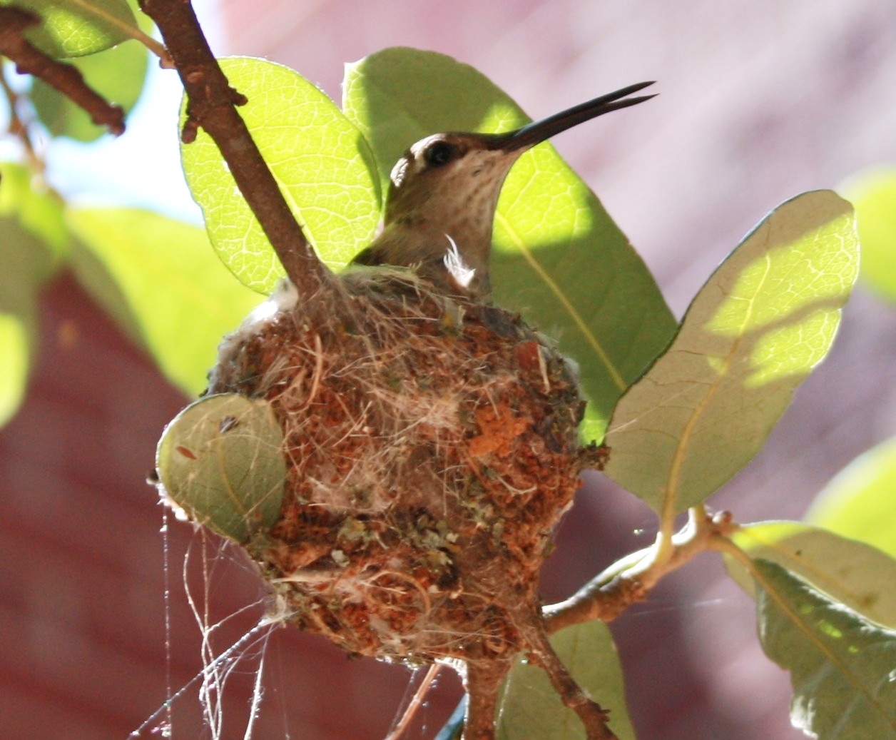 birds FACon 002.jpg