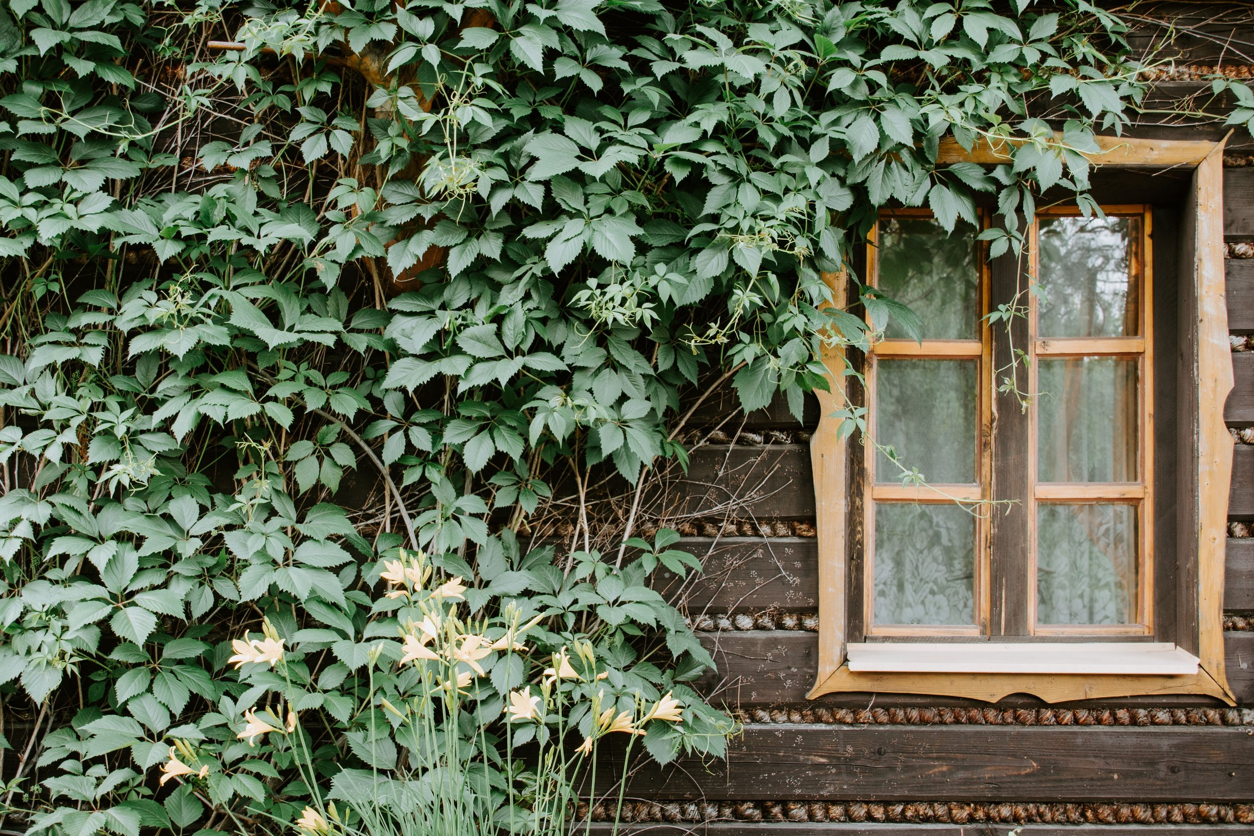 Climbing greenery hangs over this Polish building's window, offering non-rhythmic sensory stimuli each time a breeze ripples the leaves. / Image by    Pawet Czerwinski via Unsplash
