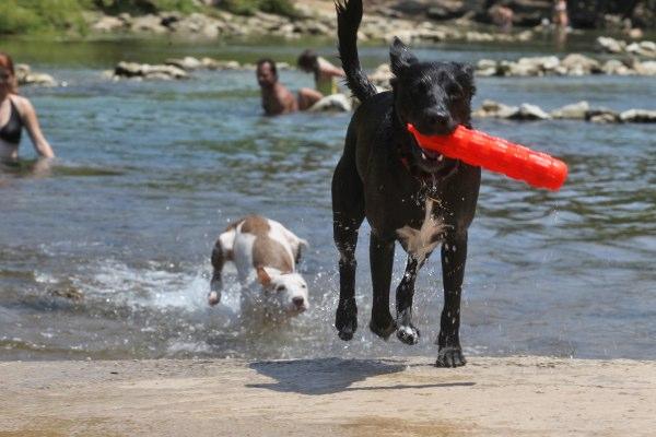 barkingsprings.jpg