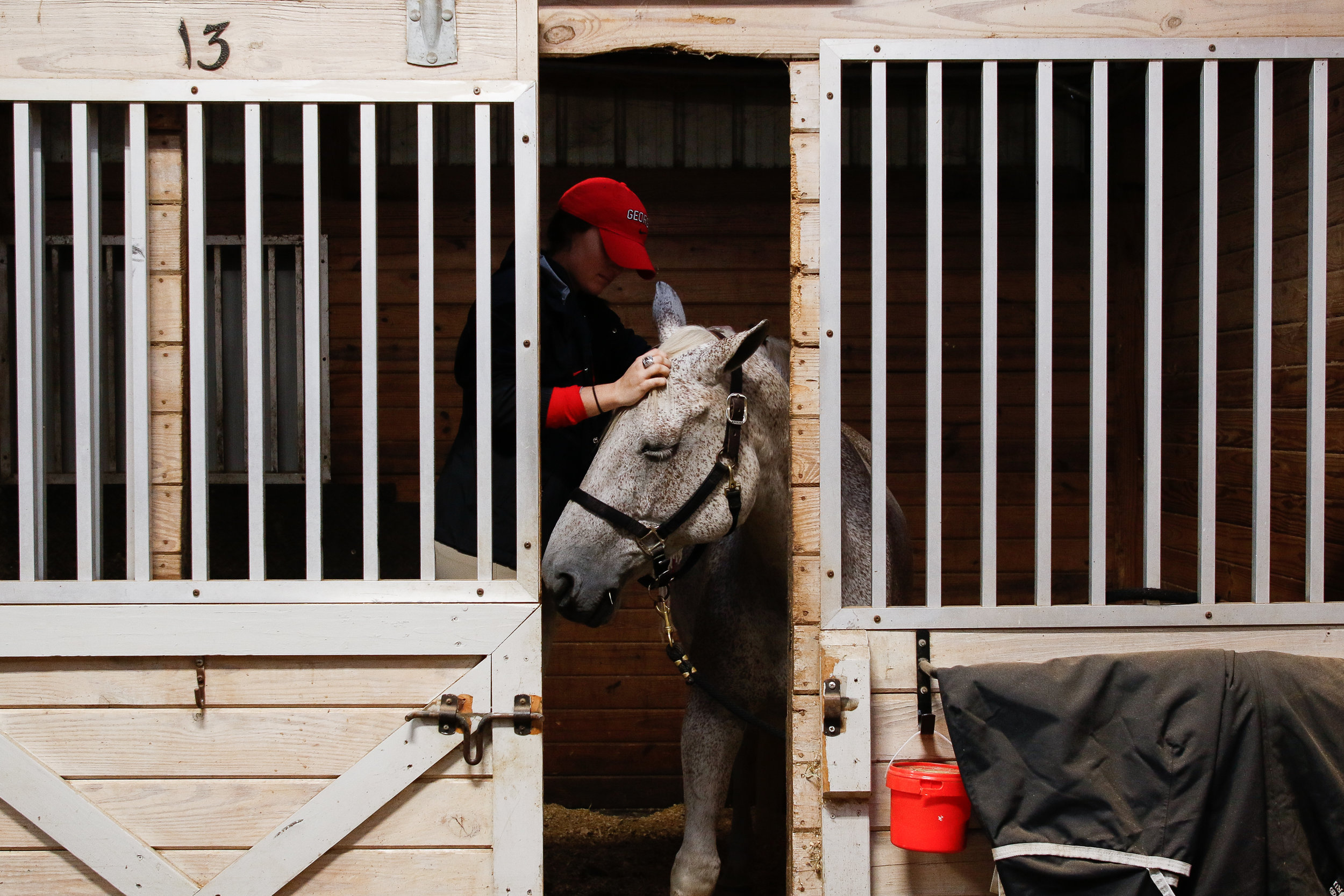 A member of the Georgia Equestrian team attempts to calm George the horse in order to continue to braid his hair before a match in Bishop, Ga., on Friday, Nov. 9, 2018. Before every meet, the team of 66 riders gather in the early morning hours to prepare the horses.