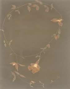 Cats Claw Vine