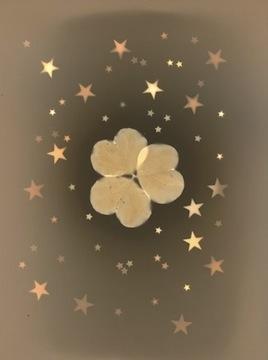 Starry Clover