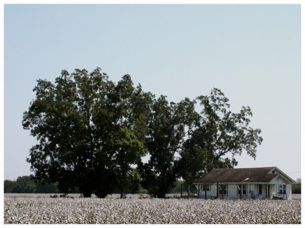 Little House - Louisiana.jpg