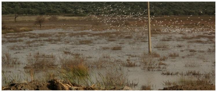 Pond - Turkey (near Cannakkale).jpg
