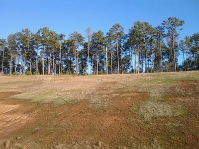 pine farm.jpg