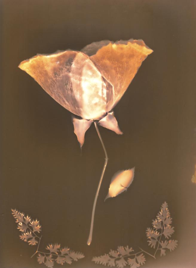 Long Stem Rose - A keepsake of the wedding flowers for the bride