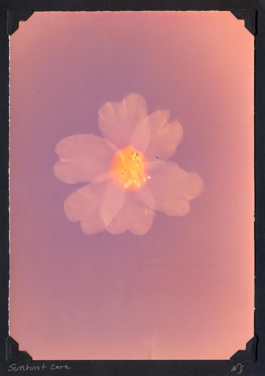 Letting Go Gallery_Sunburst Core_Lumen Print_Natasha Sanchez.jpg