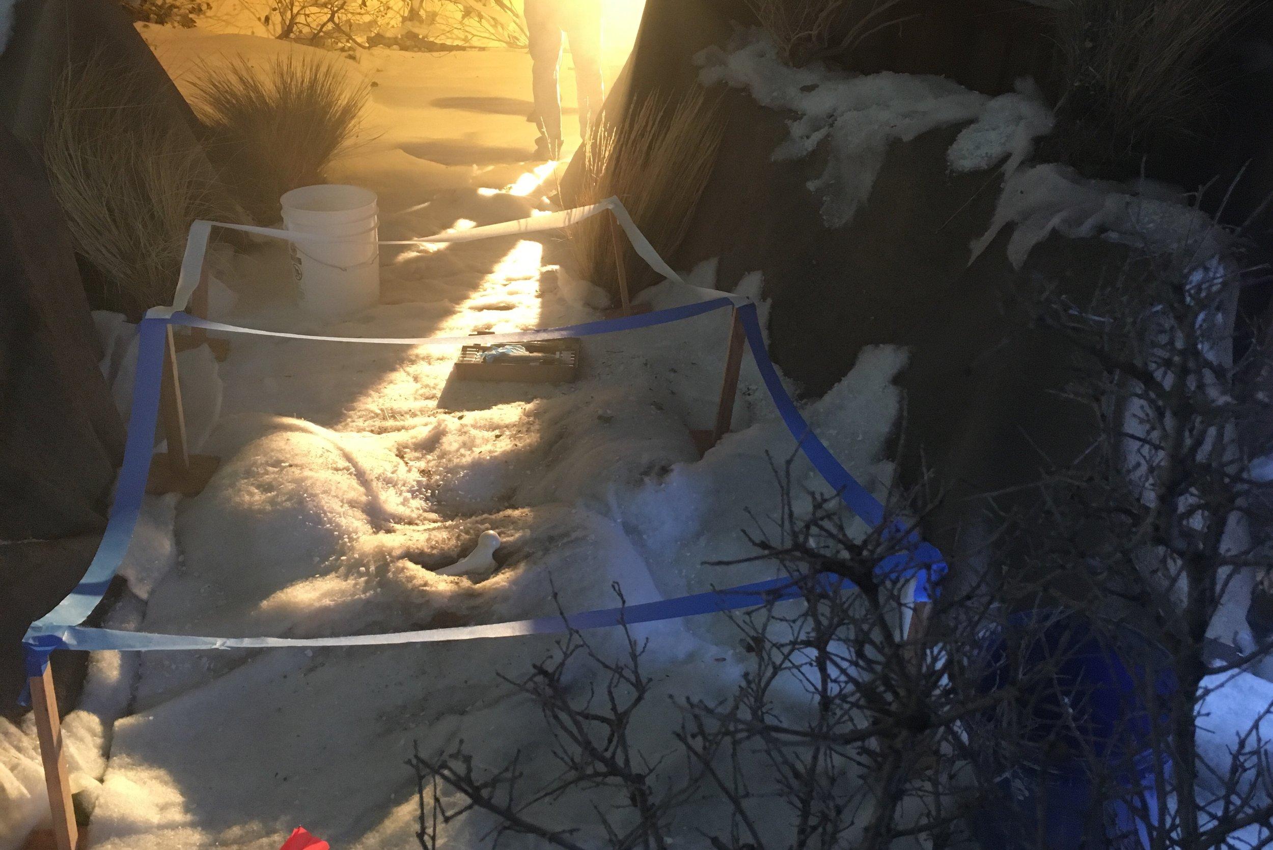 more crime scene snow