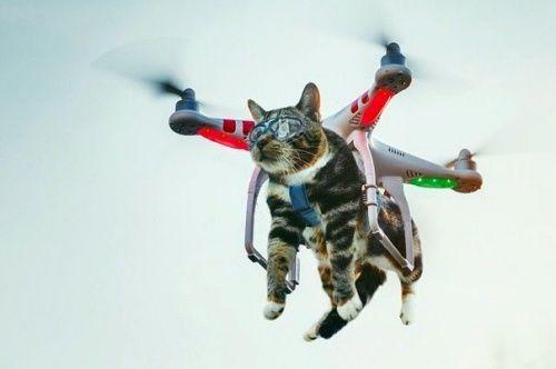 1550a2d42f035a739f00c114393c9e30--album-photos-drones 2.jpg