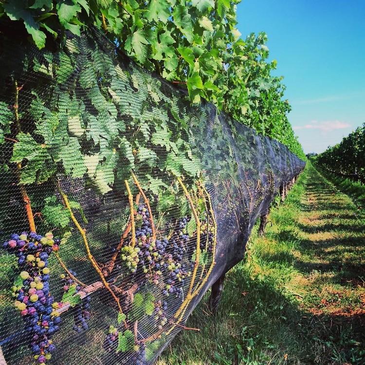 Harbes Family Vineyard