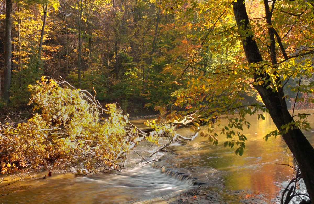 autumn_trees_ohio_creek_forest_waterfall_stream_hiking-428957.jpg