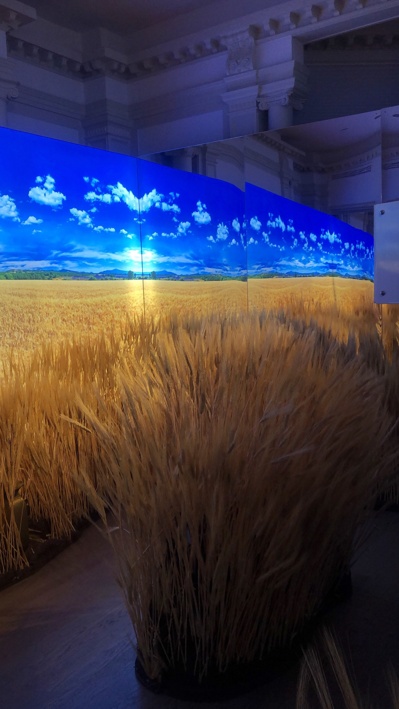 Barley Field Activation.jpg