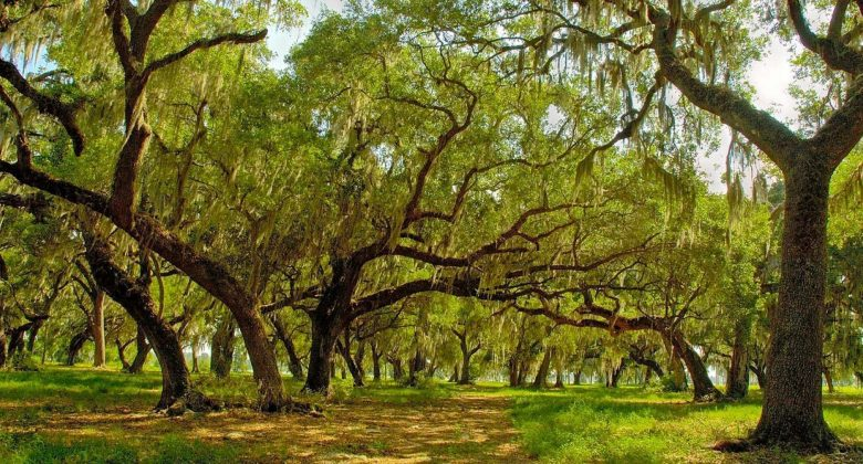 Circle B Bar Reserve Oak Hammock.  Sourced from    visitcentralflorida.org