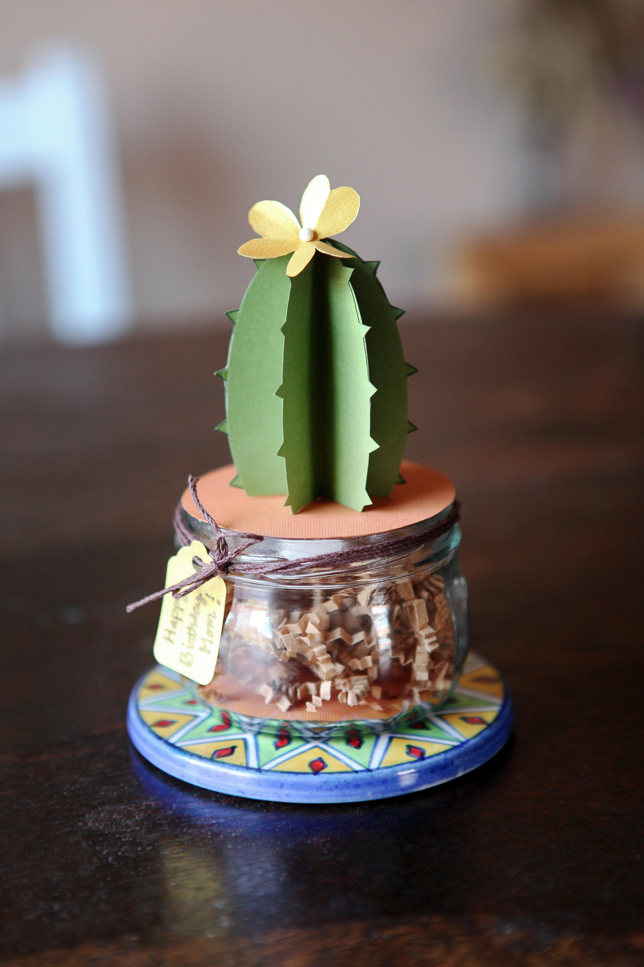 Cactus_5558.jpg