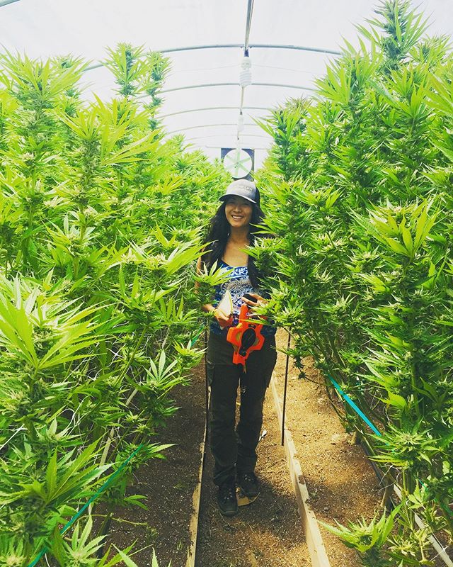 @risa.sonrisa doing what we do in Larabee 🧰 🌱 ☀️ . . . #lovewhatyoudo #dowhatyoulove #cannabis #larabee #humboldt #community #cannabisculture #humboldtcounty #cannabislifestyle #marijuanagrowers #cannabiscommunity #emeraldtriangle #humboldtgrown #cannabiz #cannabiscompliance #compliant #cannabispermitting #californiacannabis #growlife #wesupportfarmers #motherearthengineering