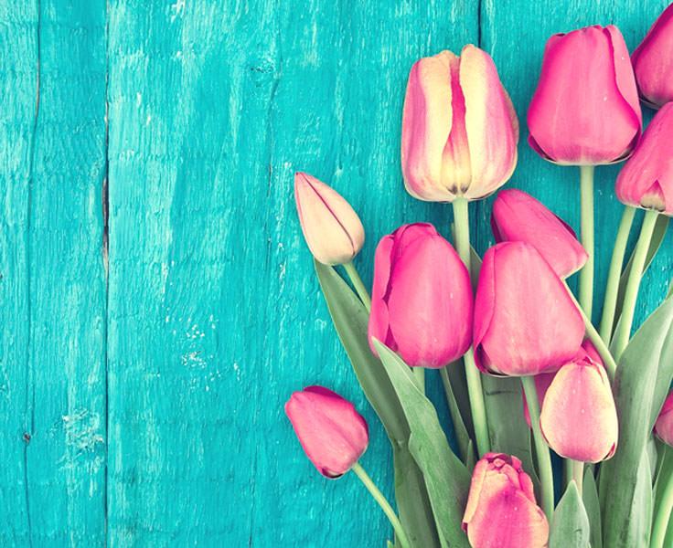 tulips-may-flowers-quiz-main.jpg