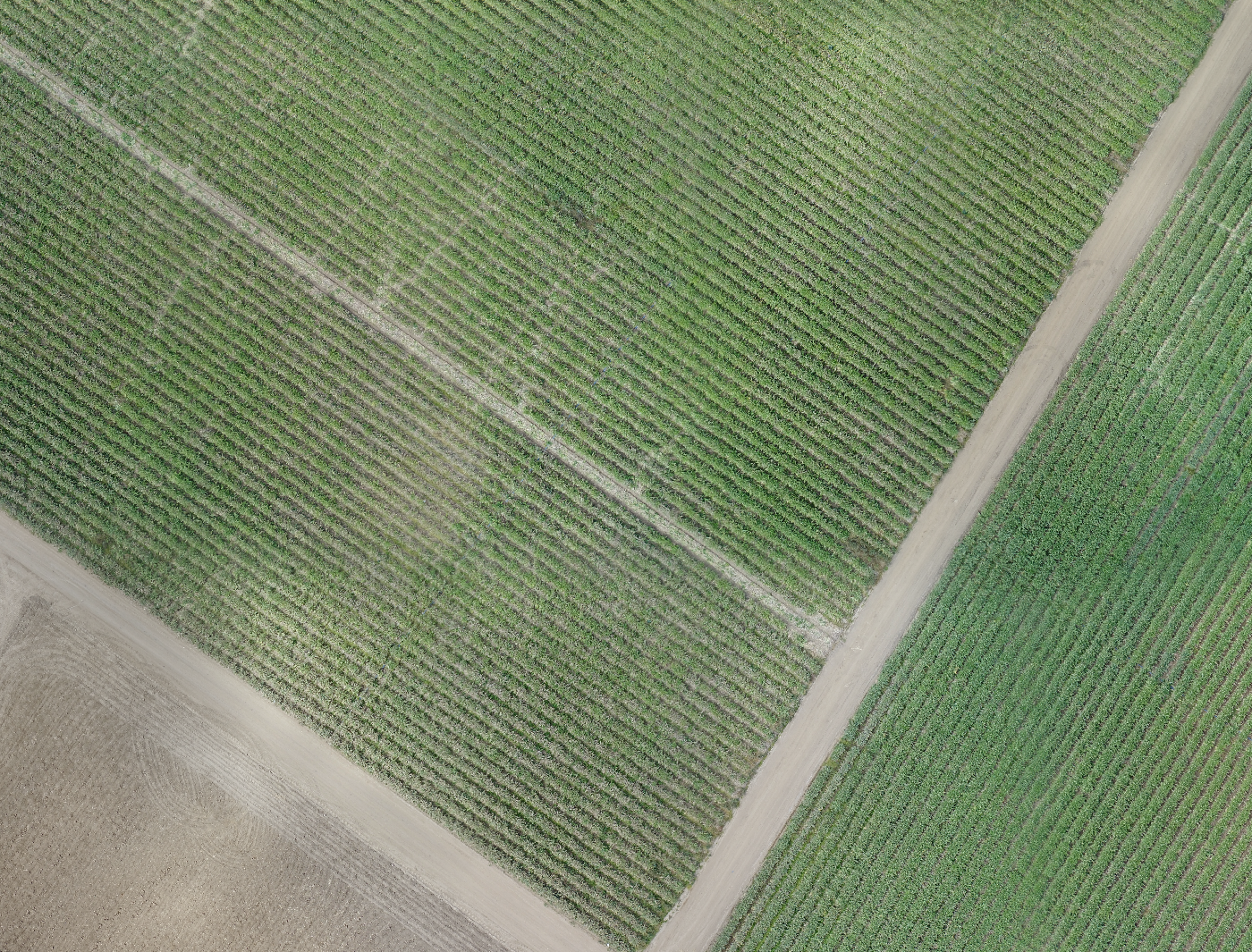Pre-Harvest imagery.
