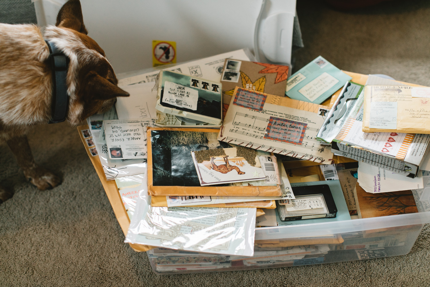 Dog sniffing pile of mail