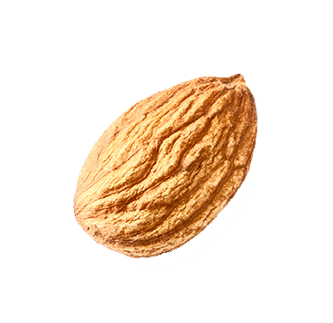 isolated-single-almond4.png