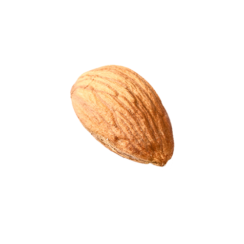 isolated-single-almond.png