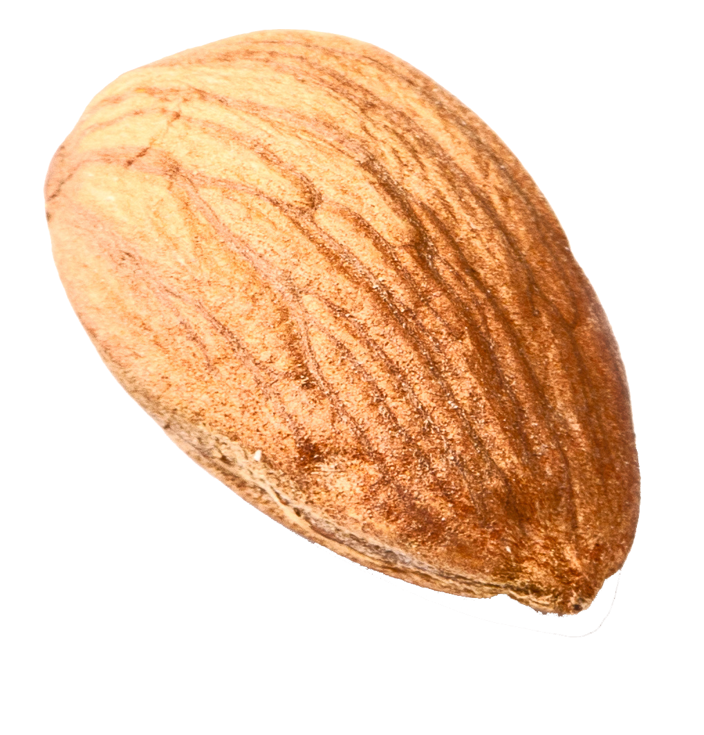 isolated-single-almond1.png