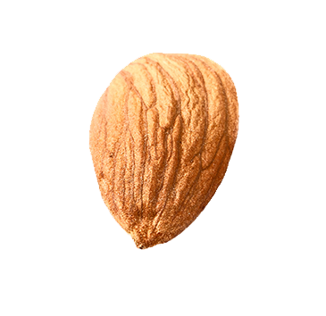 isolated-single-almond2.png