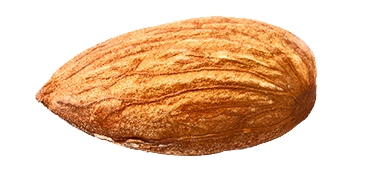 isolated-single-almond3.png