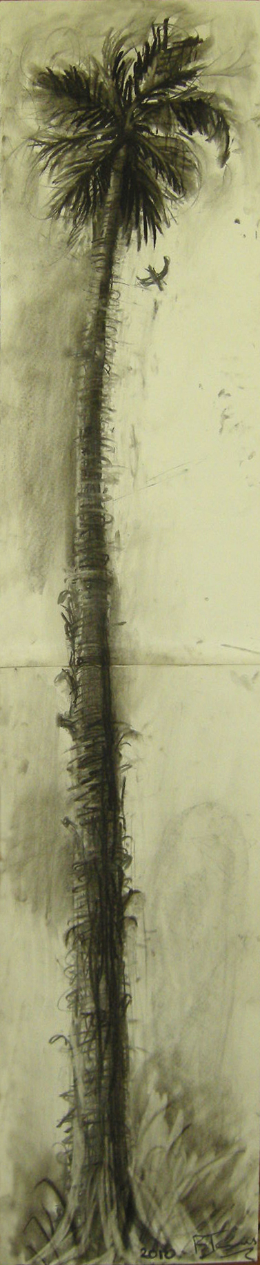 PALM TREE  Charcoal on Paper |29 x 144 cm |Framed  (available)