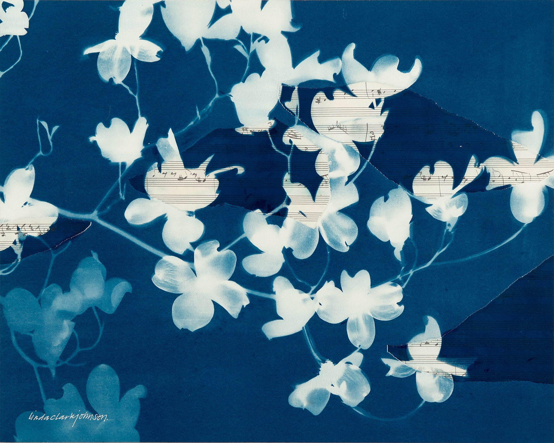Dogwood 1  | cyanotype and collage on panel | 20 x 24 | SOLD