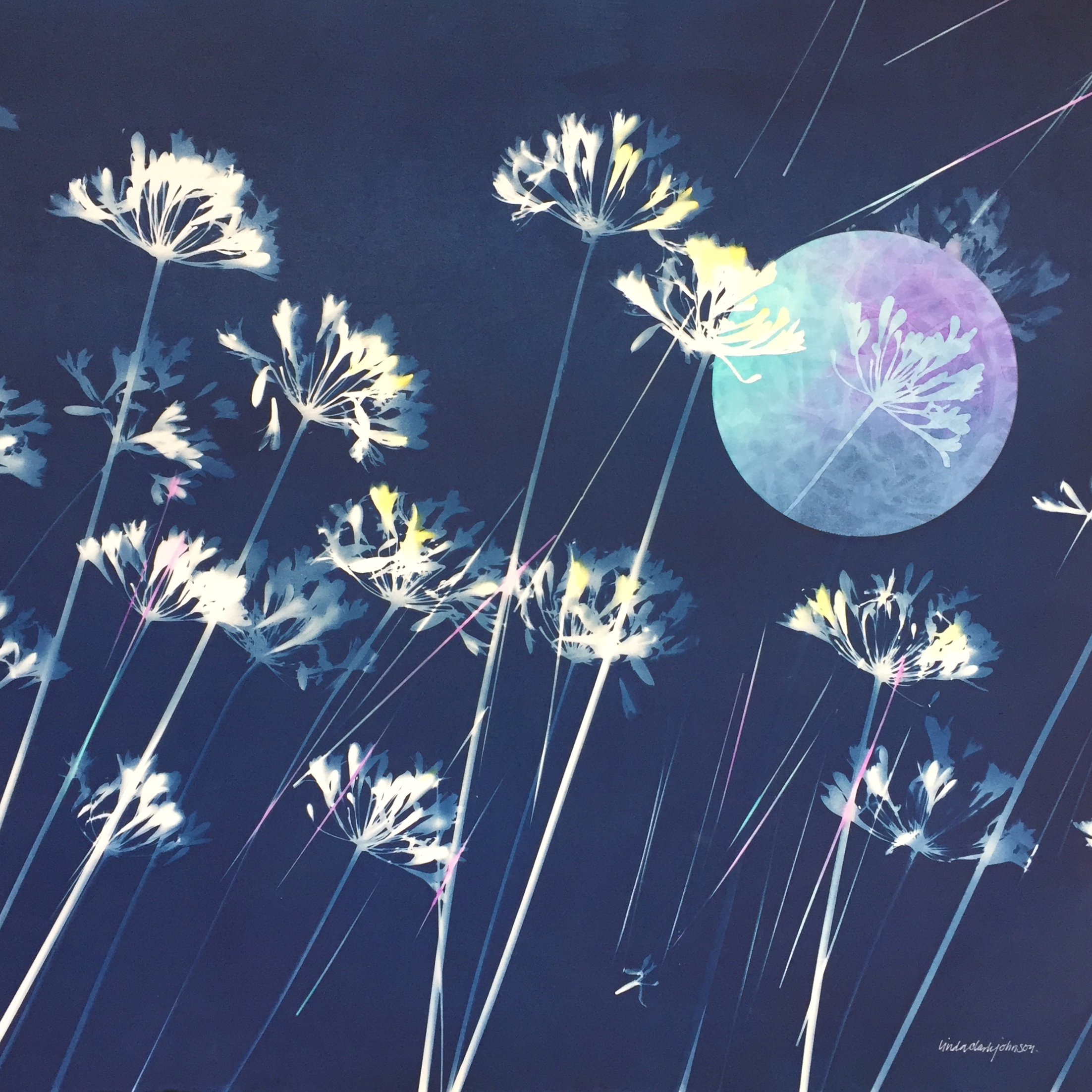 Moonbeams  | 29.5 x 29.5 | framed cyanotype and watercolor | $800