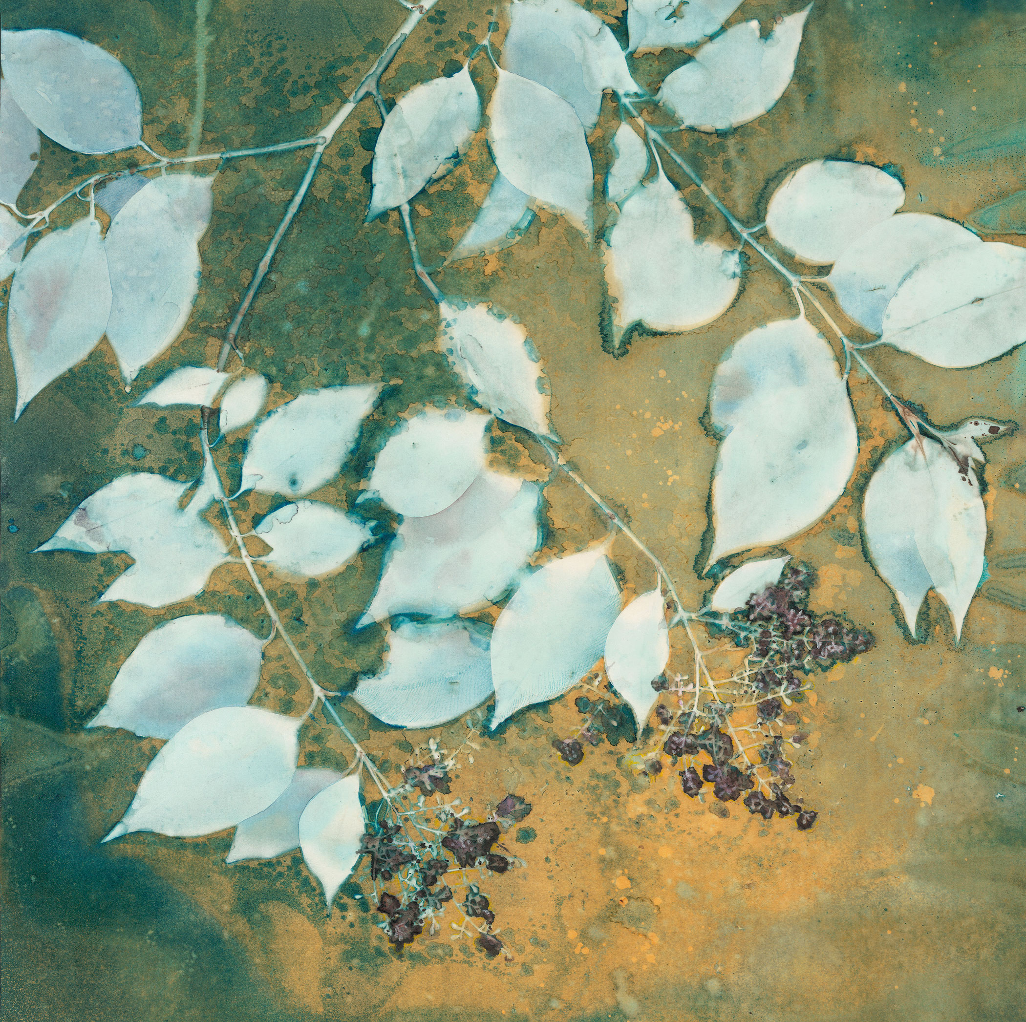 A Sky of Honey  | 20 x 20 | altered cyanotype on cradled panel | SOLD, prints available