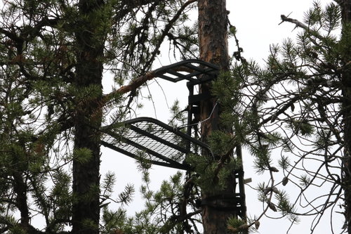 Tree stand | Bear Hunting | Wilderness Family Outfitters | Saskatchewan