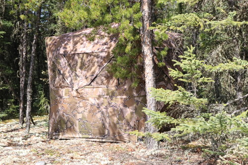 Ground Blinds | Bear Hunting | Wilderness Family Outfitters | Saskatchewan