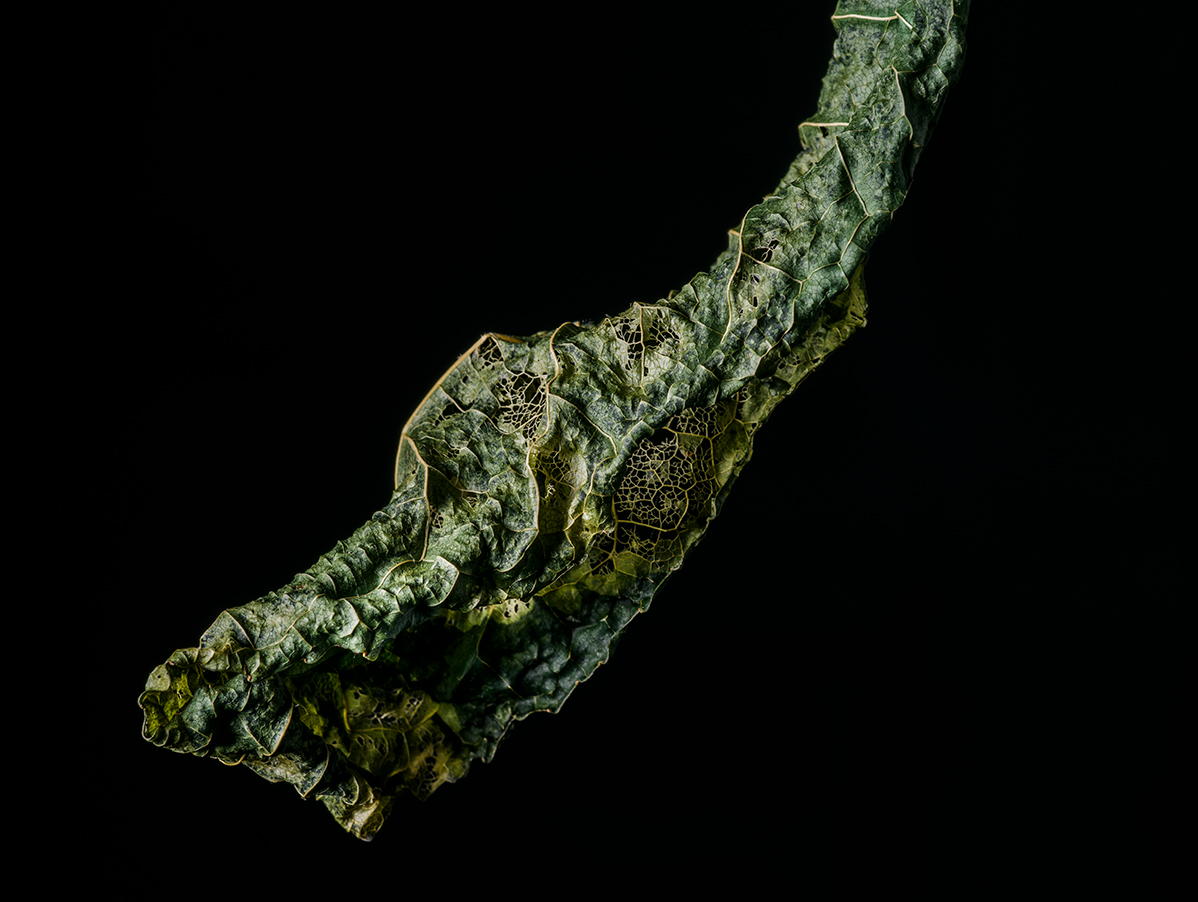 Celestial Leaf