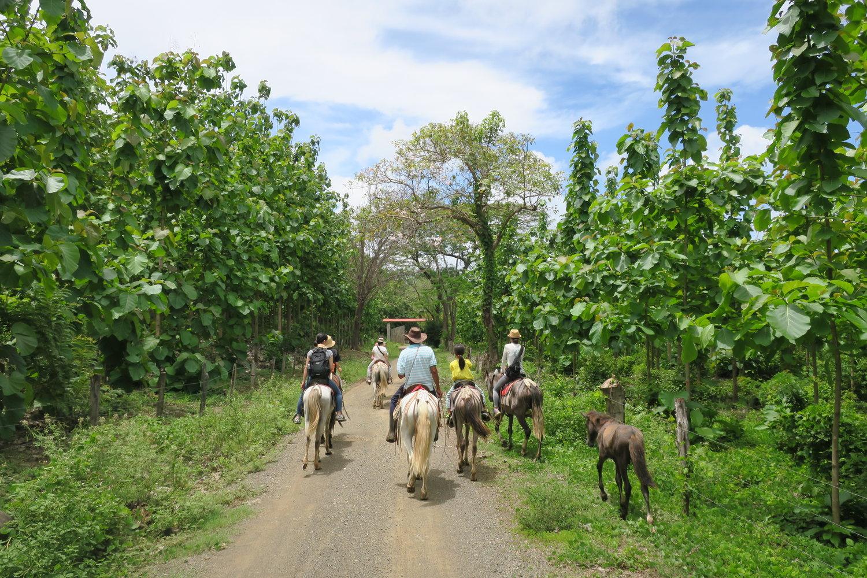 馬に乗ったり、現地の人と交流したりと、コスタリカという国を満喫しましょう!