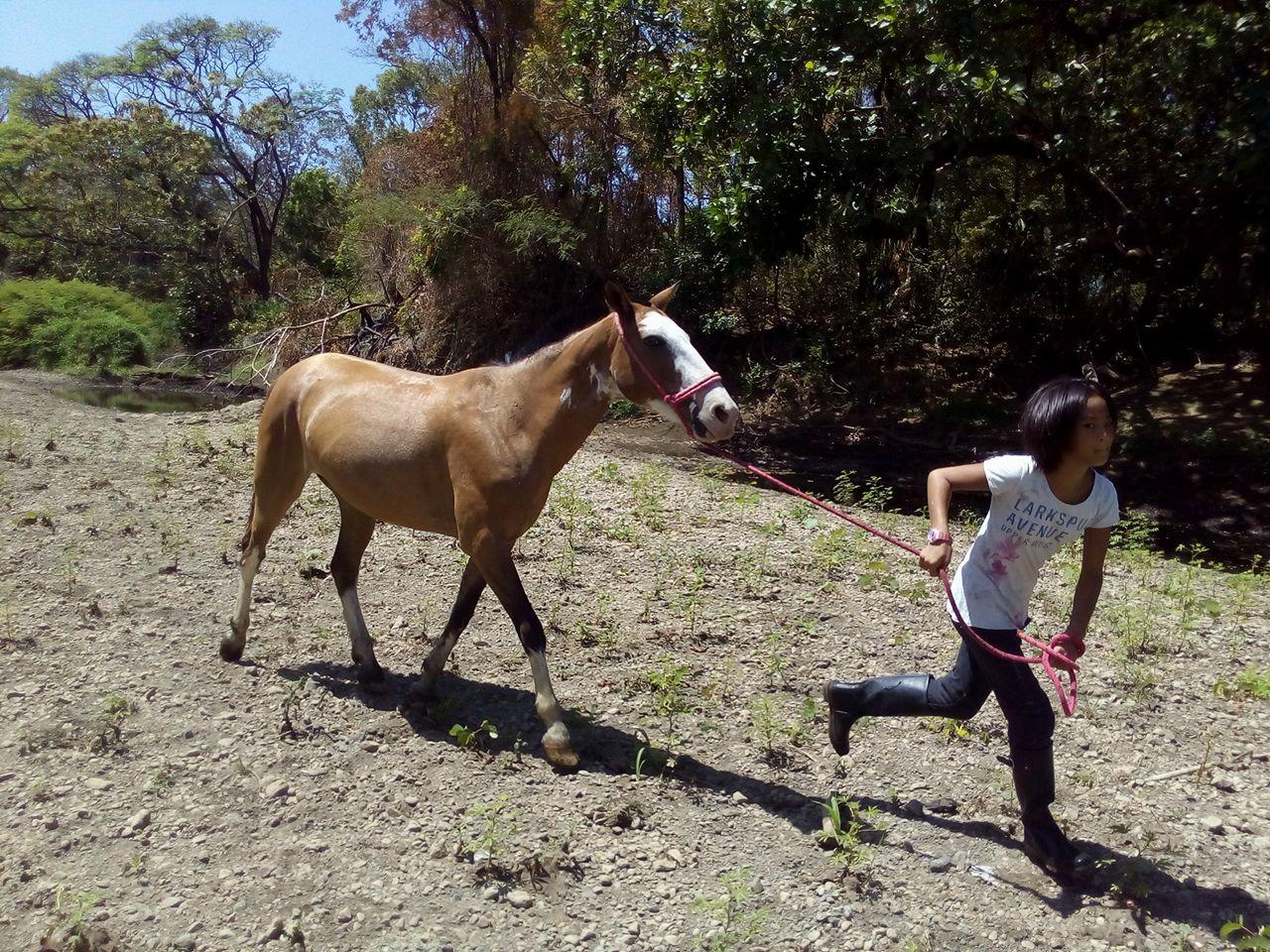 コスタリカ在住5年目、海外在住7年目。5年目にしてここでの生活が定着してきた感じがあります。11歳になる娘もインターナショナルのシュタイナー学校に通い、私も仕事が充実してきて、大自然の中で世界中の人たちに囲まれ、二人ともありがたく生活をエンジョイしています。念願の馬も飼い始め、11歳の娘も逞しいジャングル・ガールに育っています!