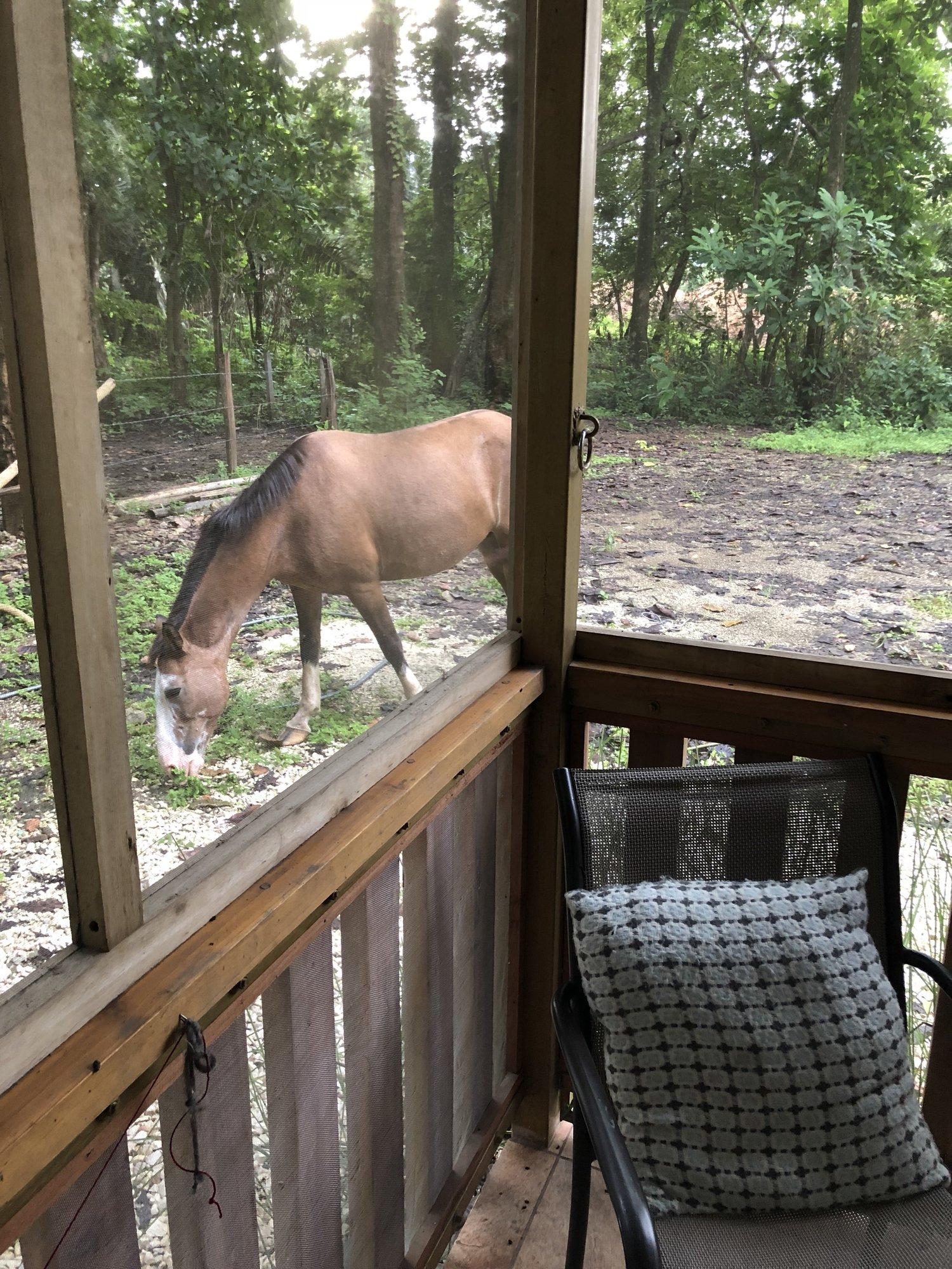 我が家の外にあるリビング?からの眺め。馬のナランハ、優雅にお食事中です〜。